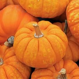 Pumpkin Season with OPTIFAST